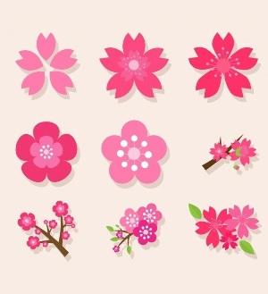 18 английских идиом о цветах с примерами употребления